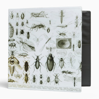 Entomology Insects Binder
