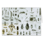 Entomology Insects Greeting Card