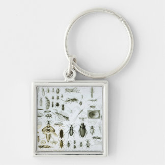Entomology Insects Keychain