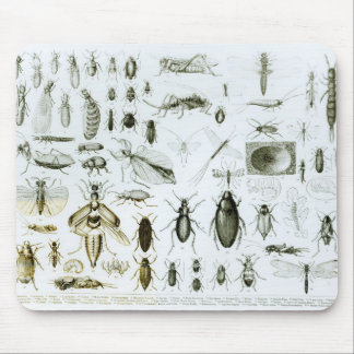 Entomology Insects Mouse Pad