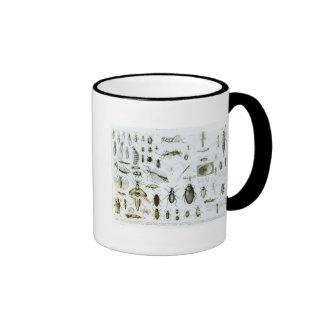 Entomology Insects Coffee Mug