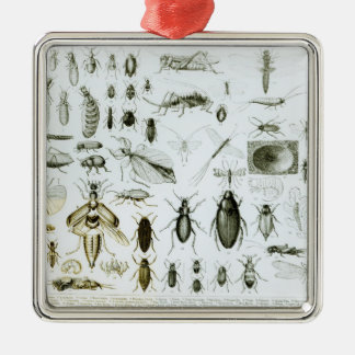 Entomology Insects Ornaments