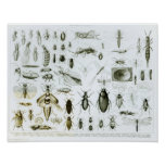 Entomology Insects Poster