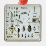 Entomology Insects Square Metal Christmas Ornament