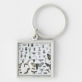 Entomology Keychain
