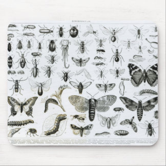 Entomology Mouse Pad
