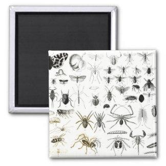 Entomology Myriapoda and Arachnida Refrigerator Magnets