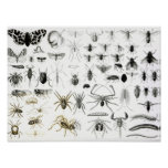 Entomology, Myriapoda and Arachnida Poster