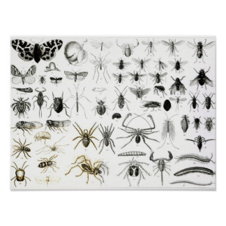 Entomology, Myriapoda and Arachnida Poster