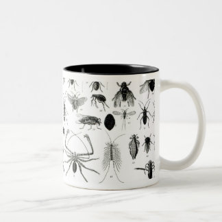 Entomology, Myriapoda and Arachnida Two-Tone Coffee Mug