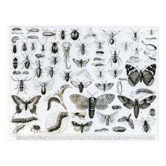 Entomology Postcard