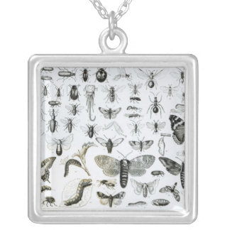 Entomology Silver Plated Necklace