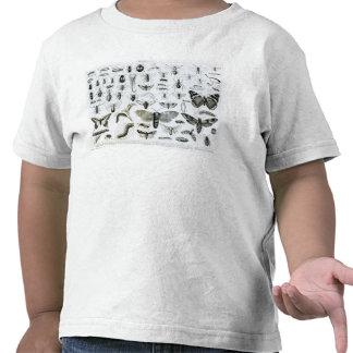 Entomology T-shirt