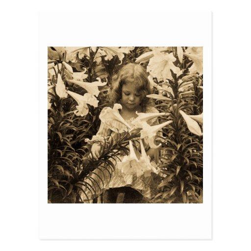 Entre el Lillies - vintage Stereoview Tarjeta Postal