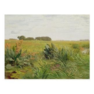 Entre Geest y el pantano, c.1880 Tarjetas Postales