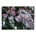 Entrega a la primavera felicitacion