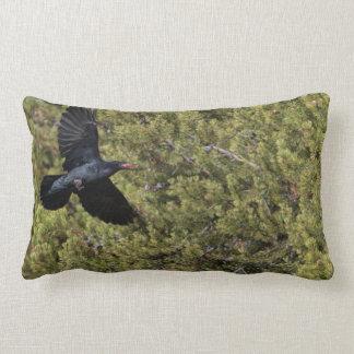 Entrega del cuervo almohada