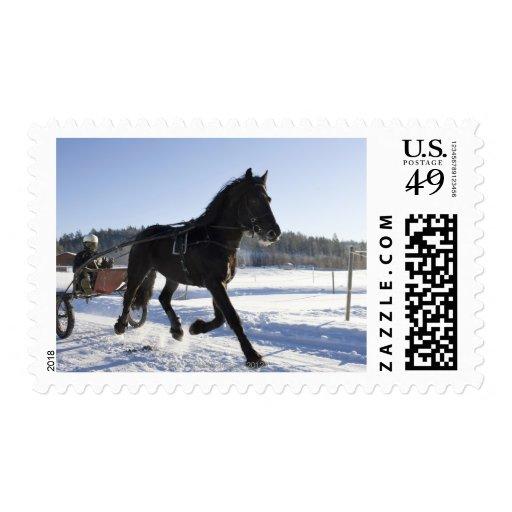 Entrenamiento de caballos en un paisaje hivernal,
