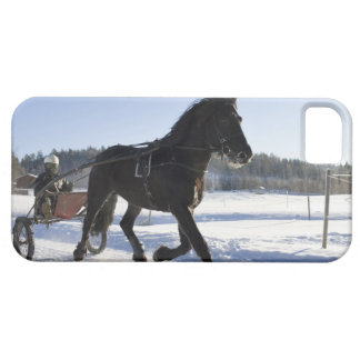 Entrenamiento de caballos en un paisaje hivernal, iPhone 5 fundas