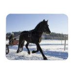Entrenamiento de caballos en un paisaje hivernal, imán flexible