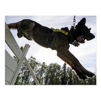 Entrenamiento del perro policía del pastor alemán postales