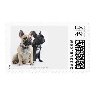 Entrenamiento y obediencia del perro estampillas