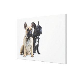Entrenamiento y obediencia del perro impresion en lona