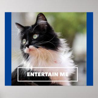 Entreténgame - imagen divertida del gato de la póster