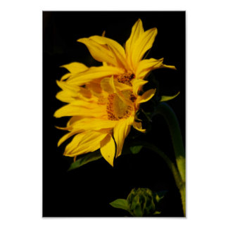 Entwined sunflower and its meaning poster