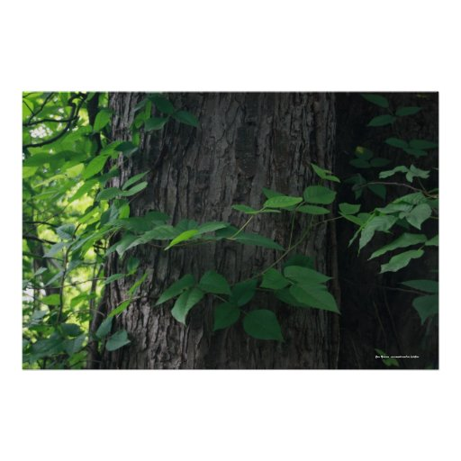 Entwined Tree Print