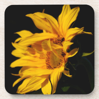 Entwined yellow sunflowers coaster