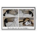 Envíe una impresión linda divertida de los gatos d tarjetas
