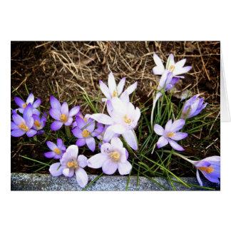 Envío de las flores tarjeta pequeña