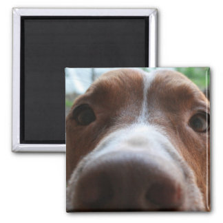 Enzo the Wonder Pit 2 Inch Square Magnet