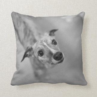Enzo's Pillow