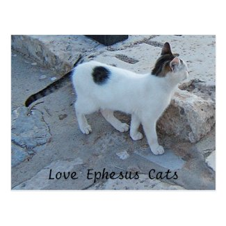 Ephesus Cats Postcard