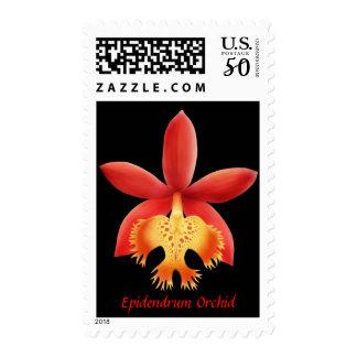 Epidendrum Orchid Flower Postage