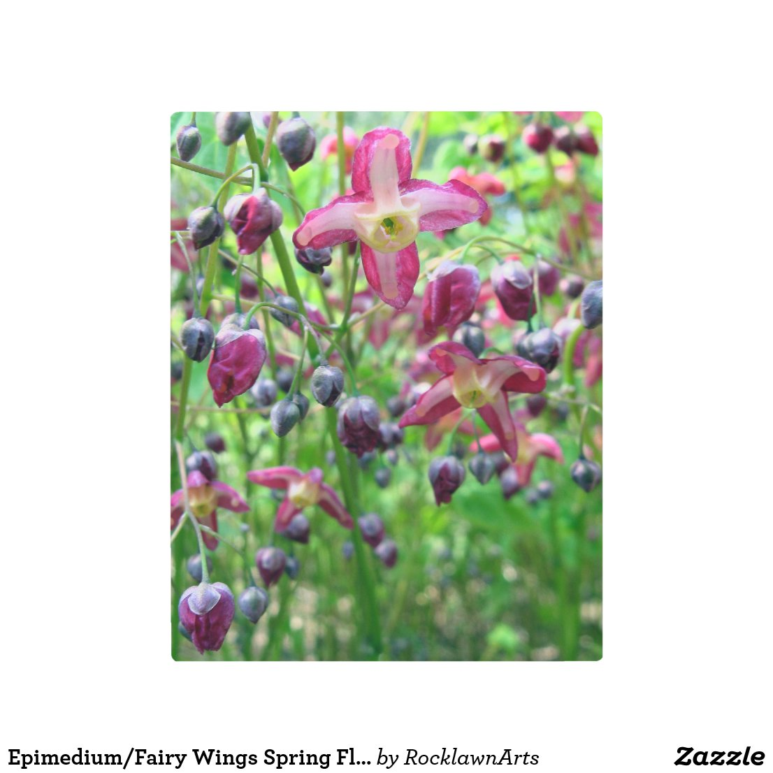 Epimedium Flowers and Buds Metal Photo Print