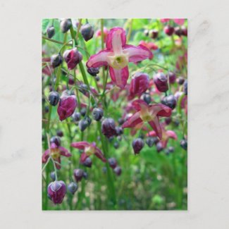 Epimedium Flowers Postcard