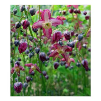 Epimedium Flowers print