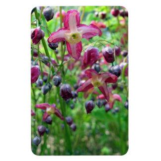 Epimedium Flowers Rectangular Photo Magnet