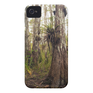 Epiphyte Bromeliad in Florida Forest Case-Mate iPhone 4 Case