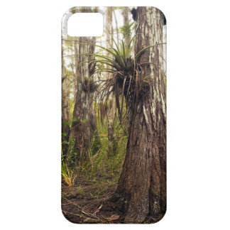 Epiphyte Bromeliad in Florida Forest iPhone SE/5/5s Case
