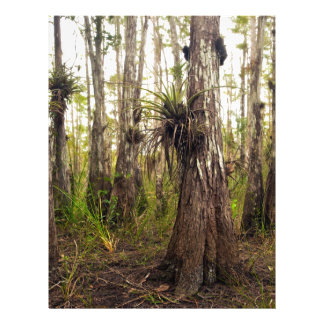 Epiphyte Bromeliad in Florida Forest Letterhead