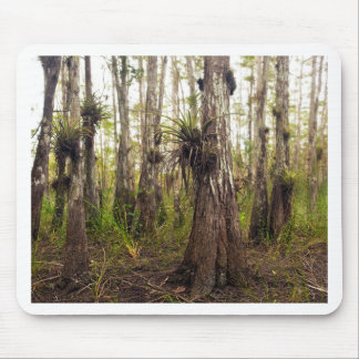 Epiphyte Bromeliad in Florida Forest Mouse Pad