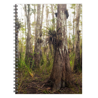 Epiphyte Bromeliad in Florida Forest Notebook