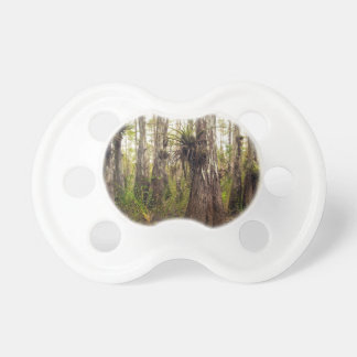 Epiphyte Bromeliad in Florida Forest Pacifier