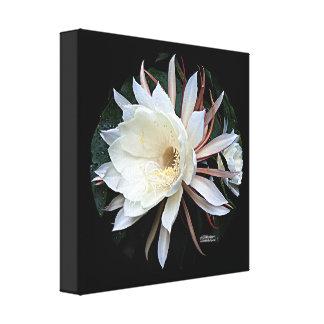Epiphyte Cactus Flower Canvas Print