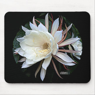 Epiphyte Cactus Flower Mouse Pad