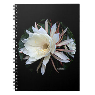 Epiphyte Cactus Flower Notebook